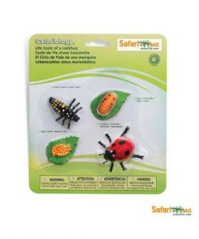 Safari Ltd. Life Cycle of a Ladybug